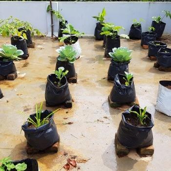 Organic Farming 6