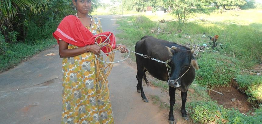 Rural Livelihoods 2