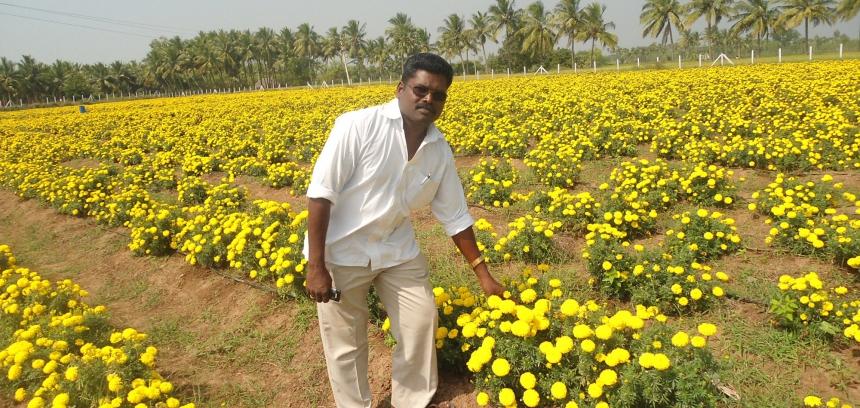 Rural Livelihoods 3