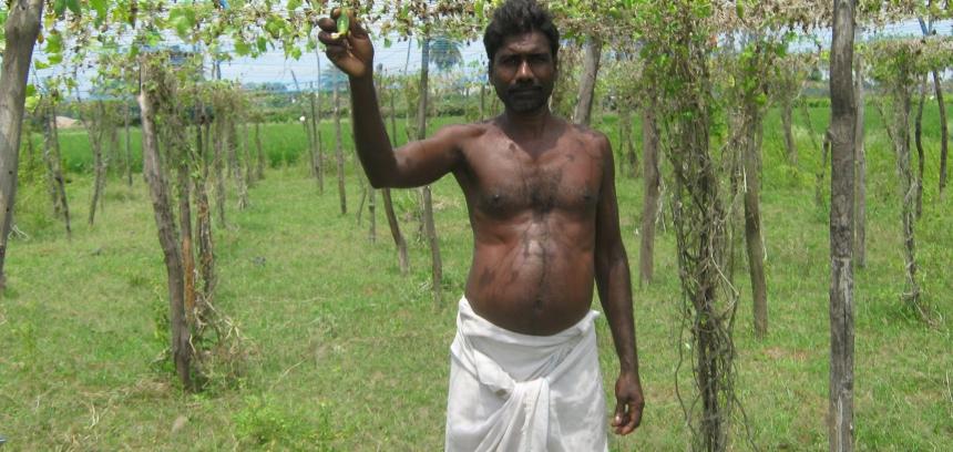 Rural Livelihoods 4