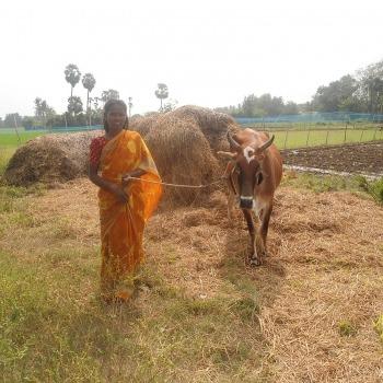Rural Livelihoods 6