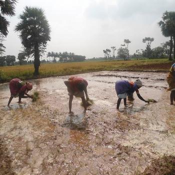 Rural Livelihoods 7