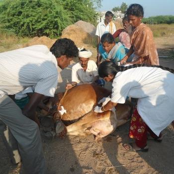 Rural Livelihoods 8